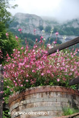 Fiori nel Lavozzu Alpisella
