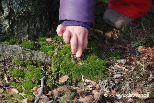 Raccogliere ghiande e tesri del bosco con i bimbi