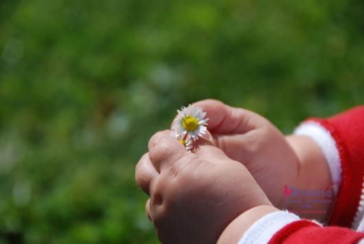 Un fiorellino per la festa del papà