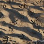 impronte di gabbiani sulla spiaggia