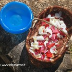 Giocare con i bambini a fare i profumi con i petali di rosa