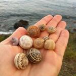 chiocciola_lumaca_snail_caracol_escargot