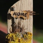sweethome_diy_handmade_lichene_giallo_yellow_lichen_plant_driftwood_craft_2