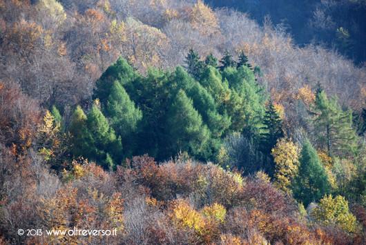 autunno_montagna_ fall_foliage