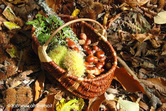 autunno_montagna_lavori_raccogliere_castagne
