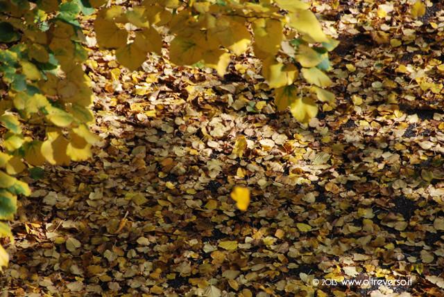 autunno_oltreverso
