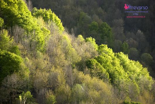 13_primavera-montagna-spring-mountain