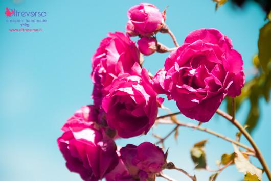 petali-rose