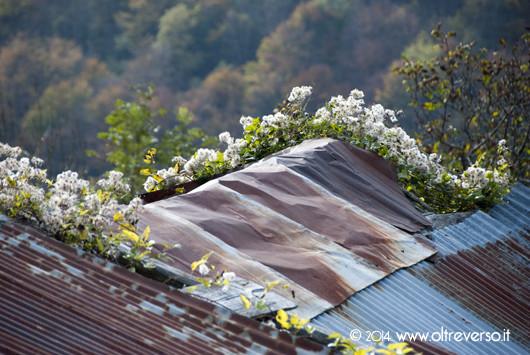 autunno-montagna-autumn-mountain-fotooltreverso