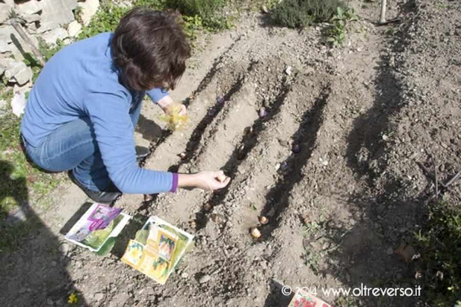 Piantare i bulbi in autunno: giardinaggio con i bambini